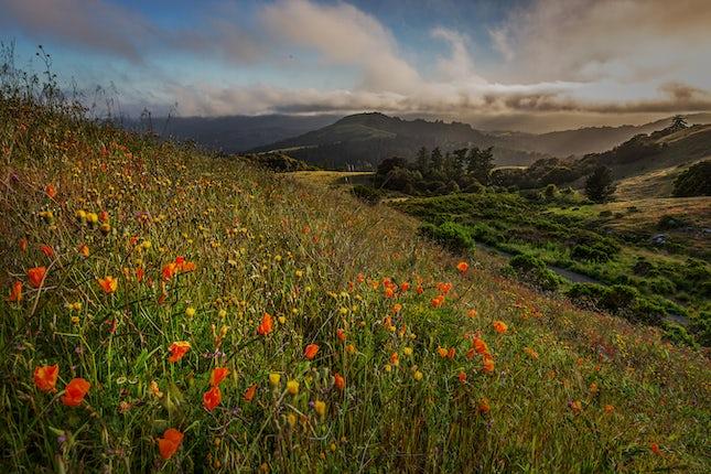 Spring Wildflowers, Santa Cruz Mountains, CA