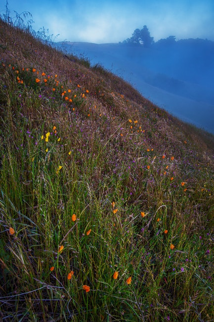 Hills Of Color, Santa Cruz Mountains, CA