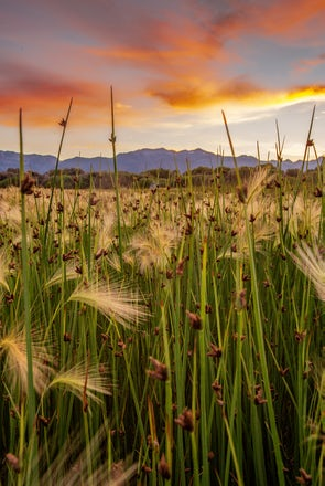 Tranquility Amongst the Reeds
