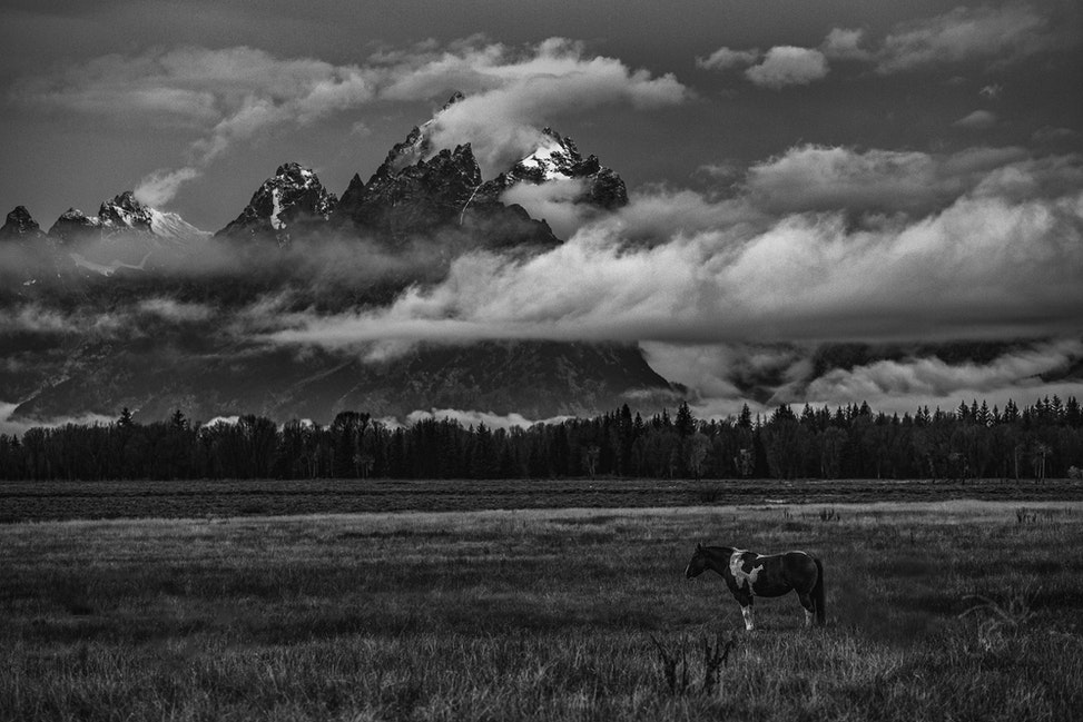 The Watcher, Teton National Park - A lone horse stands in a field serving as a wonderful foreground for the great Teton Mountain Range.