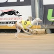 Albion Park 15 07 18 - Photos taken by David McInally