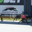 Albion Park 18 07 18 - Photos Taken By Toby Coutts
