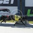 Race 3 El Romano