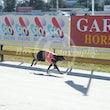 Race 4 Rosalie Who