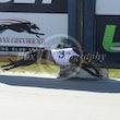 Race 5 Super Cesc