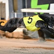 Albion Park 02 08 18 - Photos taken by Michael McInally and Toby Coutts