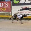 Albion Park 19 08 18 - Photos taken by David McInally