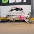Albion Park 20 08 18 - Photos taken by Michael McInally and Toby Coutts