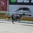 Albion Park 29 08 18 - Photos taken by Toby Coutts