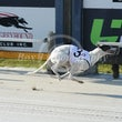 Albion Park 12 09 18 - Photos Taken By Toby Coutts