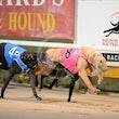 Albion Park 13 09 18 - Photos taken by Michael McInally and Toby Coutts
