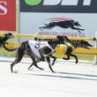 Albion Park 10 10 18 - Photos Taken By Toby Coutts
