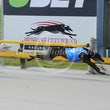 Albion Park 17 10 18 - Photos Taken By Toby Coutts