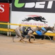 Albion Park 05 11 18 - Photos Taken By Toby Coutts