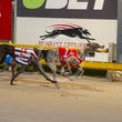 Albion Park 08 11 18 - Photos Taken By Toby Coutts
