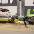 Albion Park 12 11 18 - Photos Taken By Toby Coutts