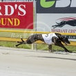 Albion Park 14 11 18 - Photos Taken By Toby Coutts
