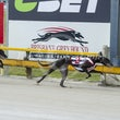 Albion Park 21 11 18 - Photos taken by Toby Coutts