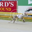 Albion Park 05 12 18 - Photos Taken By Toby Coutts