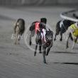 Race 12 Memphis