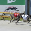 Albion Park 12 12 18 - Photos Taken By Toby Coutts