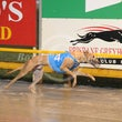 Albion Park 17 12 18 - Photos taken by Michael McInally and Toby Coutts