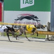 Albion Park 02 01 19 - Photos Taken By Toby Coutts