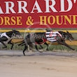 Albion Park 28 02 19 - Photos taken by Michael McInally
