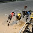 Race 3 Angel Gear
