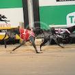 Race 6 Zenyatta Miss