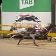 Albion Park 08 04 19 - Photos Taken By Toby Coutts