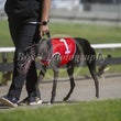 Race 7 Farmor Image
