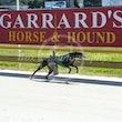 Race 2 Lady Opal