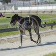 Race 5 Chicko's Charm