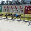 Race 6 Stinger Noir