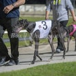 Race 4 Infrared Lad