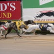 Albion Park 12 05 19 - Photos taken by Michael McInally