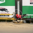 Albion Park 16 05 19 - Photos Taken By Michael McInally, Toby Coutts & Ross Stevenson
