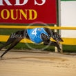 Albion Park 10 06 19 - Photos Taken By Toby Coutts