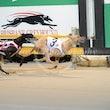 Race 3 Astra Zanti