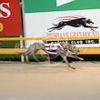 Race 4 Waikarie Willow