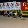 Race 5 Simmer Down