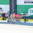 Albion Park 24 07 19 - Photos Taken By Toby Coutts