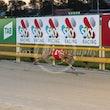 Race 8 Eli Red Fawn