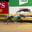 Albion Park 15 08 19 - Photos taken by Michael McInally and Toby Coutts