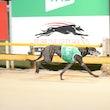 Race 3 Classy Zoro