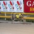 Race 11 Orange Gambler