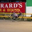 Race 6 Mac Roamin'