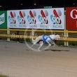 Race 11 Ebony Sands