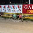 Race 1 Codrington Spark